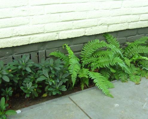 4 Schaduwrandje Varen Euphorbia | Dark Edge Fern Euphorbia | QGardens Tuinontwerp | Tuincoach Gardendesign | Gardencoach