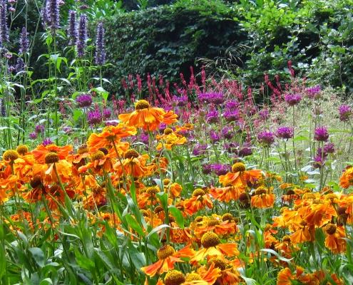 5 Sterke Bloemen Vaste Planten Helenium Zonnekruid   QGardens Tuinontwerp   Tuincoach Gardendesign Gardencoach