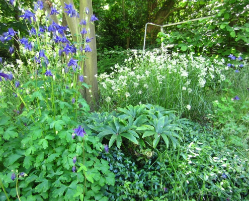Q Gardens bosrand onder krentenboom Hilversum