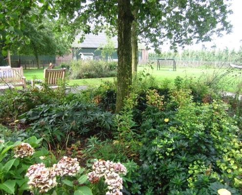 Schaduwplanten Onder De Bomen | QGardens Tuinontwerp | Gardendesign