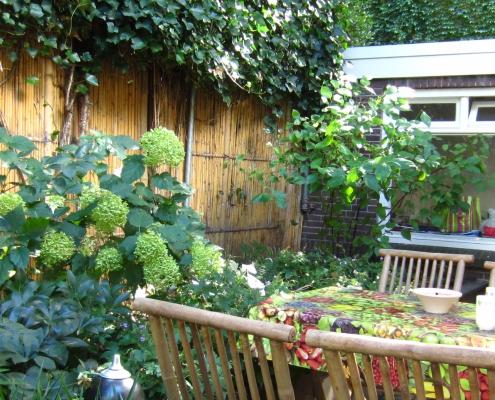 QGardens Tuinontwerp - Groene patio tuinhuis Amsterdam