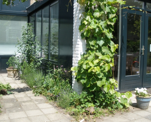 QGardens TuinOntwerp TuinCoach - Groene randen langs de gevels