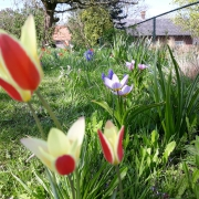 Bloemenwei in April