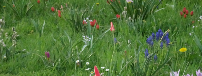 wilde bloemenwei