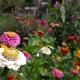 snijbloemen in augustus