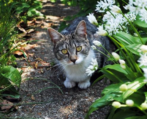 kattenoverlast