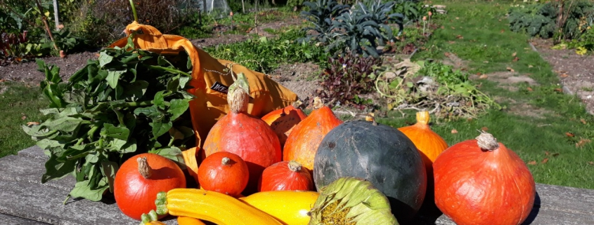 biologische moestuin oogst augustus
