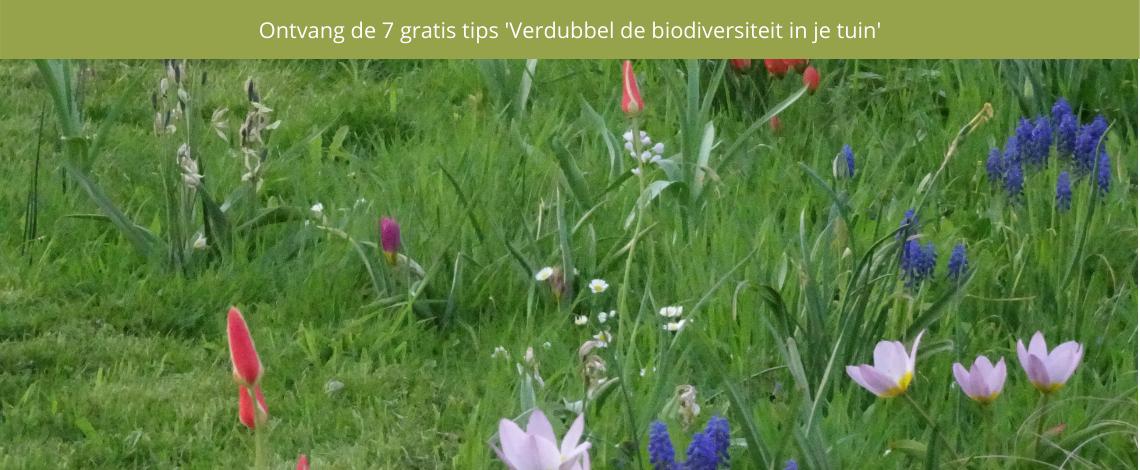 Verdubbel de biodiversiteit in je tuin